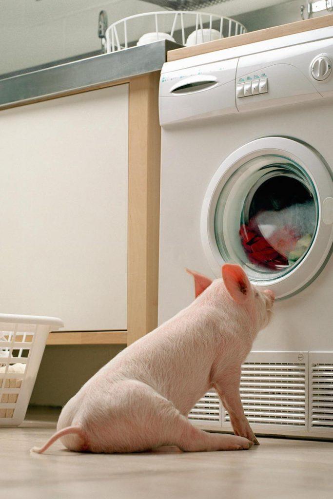 """Устранение неисправности """"стиральная машина не отжимает"""" своими силами."""